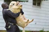 Pig Cops